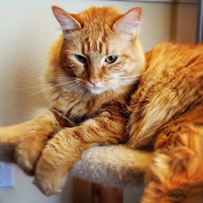 What an attitude! #cats by Tyler Landgraf - Instagram & Mobile Instagram