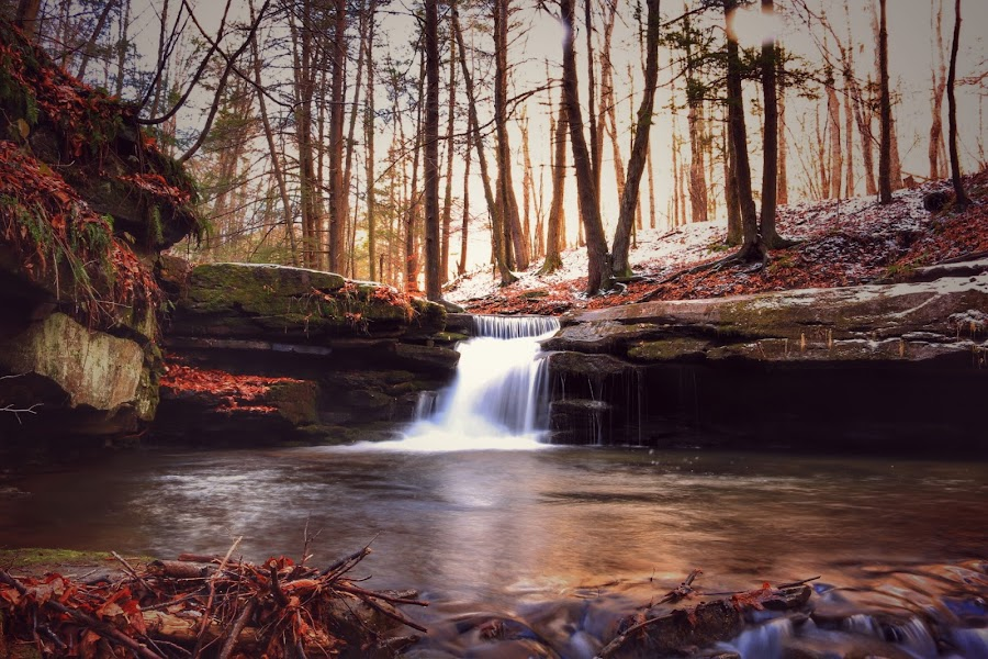 Trees by Kelly Bowers - Nature Up Close Water ( #waterfall )