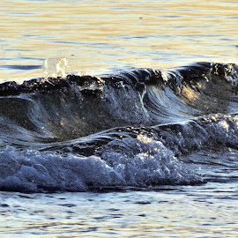 Surf in Sun by Barry Lehman - Nature Up Close Water ( waterscape, nature up close, surf,  )