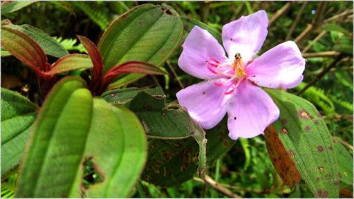 1080p Stunning Flowers
