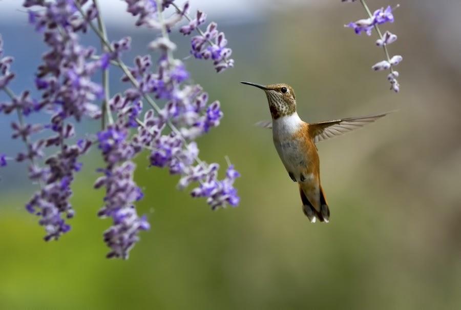 by Bill Hutson - Animals Birds