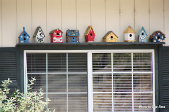 Photo: (Year 3) Day 34 - A Row of Bird Boxes on the Library in Pine Valley
