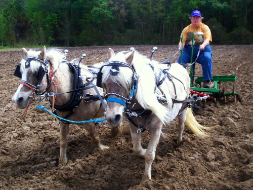 Bell & Bit pull a full size draft horse disk at Plow Day event