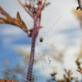 by Camilla Nilhammer - Nature Up Close Webs