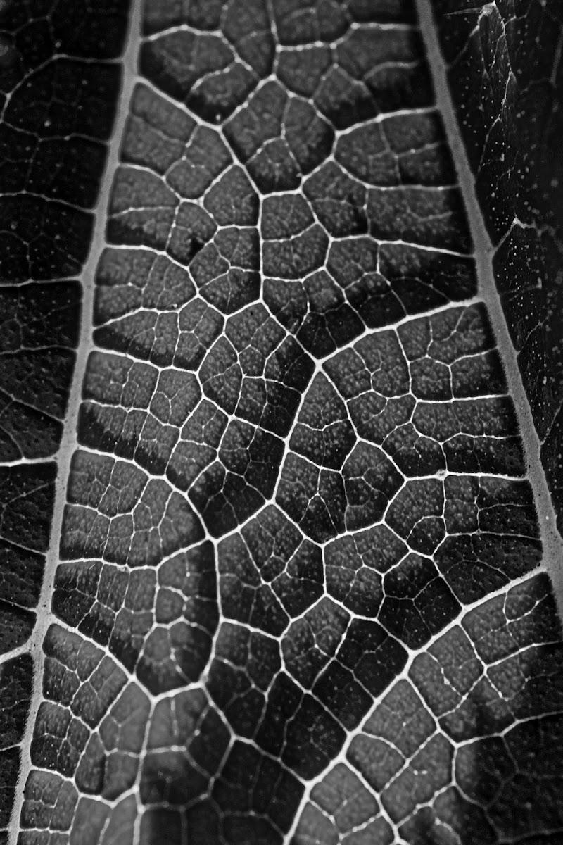 Mondo vegetale di Stefano Sarghini