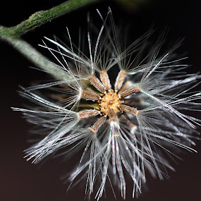 by Deepraj Das - Nature Up Close Flowers - 2011-2013