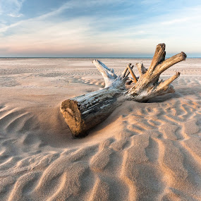 The stump by Eriks Zilbalodis - Landscapes Beaches ( sea beach sunset stamp  sand  clouds )