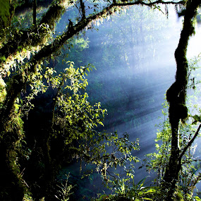 by Brandy Keleher - Landscapes Forests