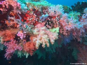 Photo: Alcyonaires. Beaucoup de coraux mous sur le site d'HP Reef-Club Med Kani (Maldives).