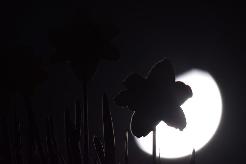 Luce nel buio... di tiziano_boldrini