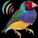 Oiseaux Appels Sons Gratuit icon