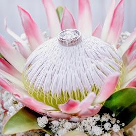 Protea Ring Shot by Ellen Strydom - Wedding Details ( ring, details, wedding )