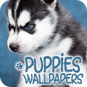 Wallpapers with puppies icon