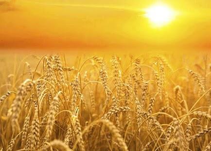 Harvest Funding - náhled