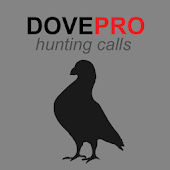 Dove Calls for Hunting