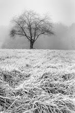 Photo: Morning Frost ©http://markuslandsmann.zenfolio.com/