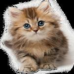 Cat Sounds Ringtones