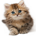 Cat Sounds Ringtones icon