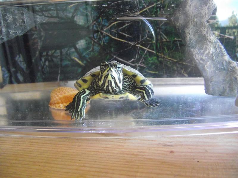 La mia tartaruga di gianmaria.donadono