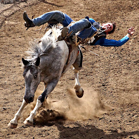 Bucking horse by Gaylord Mink - Sports & Fitness Rodeo/Bull Riding ( horse, falling, bucking, rodeo, rider )