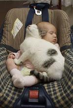 Photo: Cat Nap