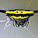 YELLOW HORNED SPIDER