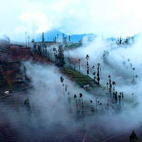 Ngadisari hill of Bromo covered by fog .... by Nyoto Nugroho Poospo - Landscapes Mountains & Hills
