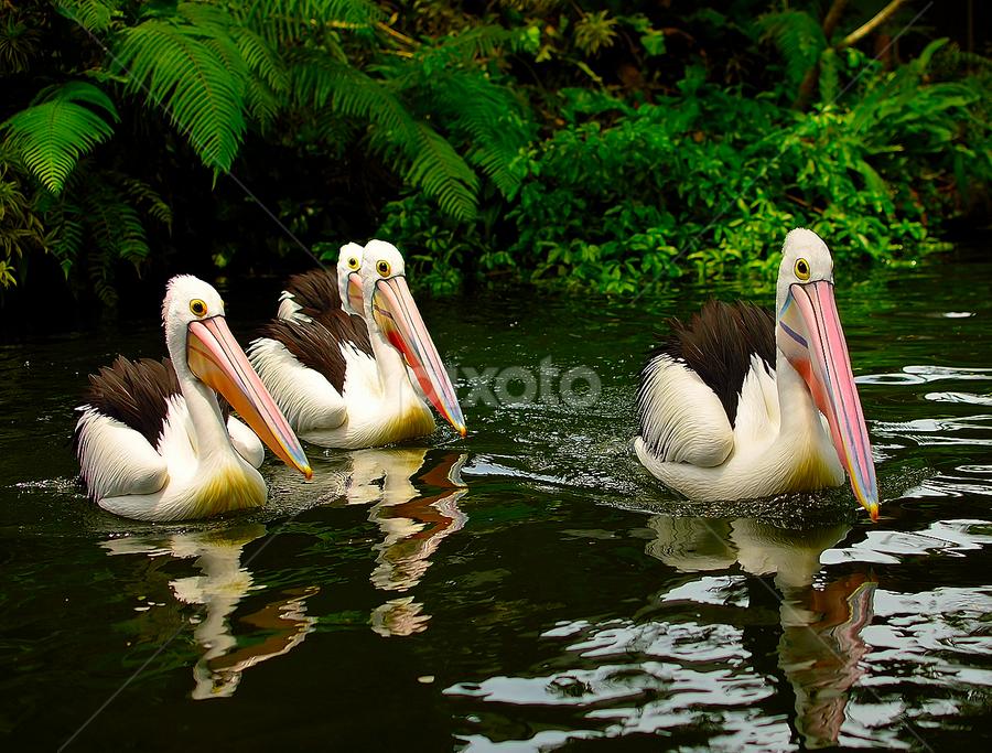 by Ary Hardiawan - Animals Birds