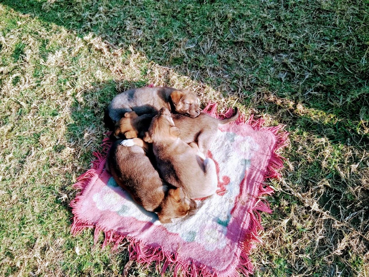 日向で眠る子犬たち