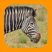 App Icon for Animals of Pilansberg App in Czech Republic Google Play Store