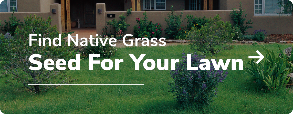 find native grass seed