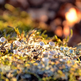 by Milica Đorđević - Nature Up Close Leaves & Grasses