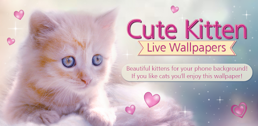 Cute kitten live wallpapers apps on google play voltagebd Choice Image