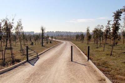 BosqueSur-Barranco de Cantoechado