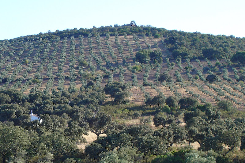 cerro castillo de viñon