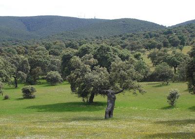Cerro Sordo