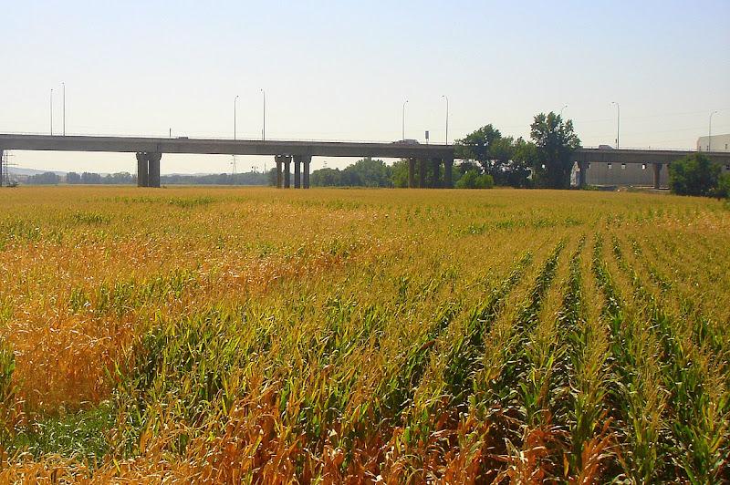 Campos de Cereal