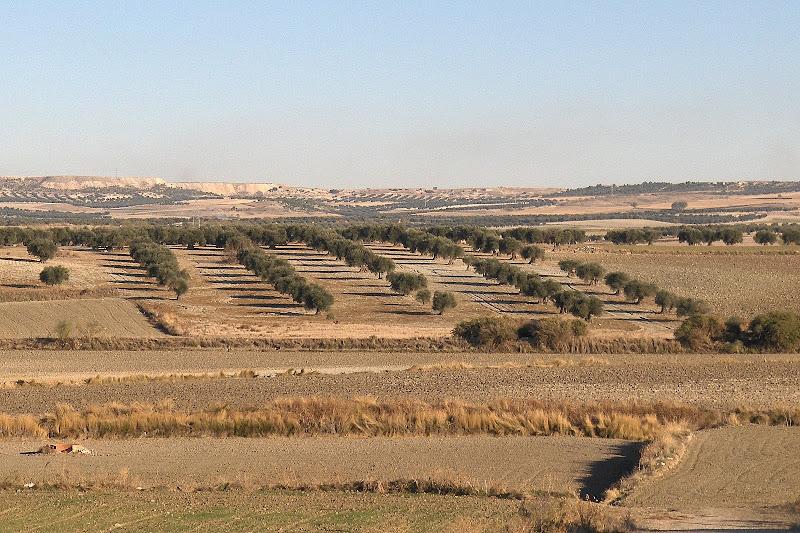 Tierras de secano