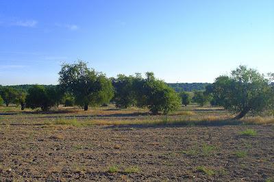 Dehesa de Almendros en Leganés