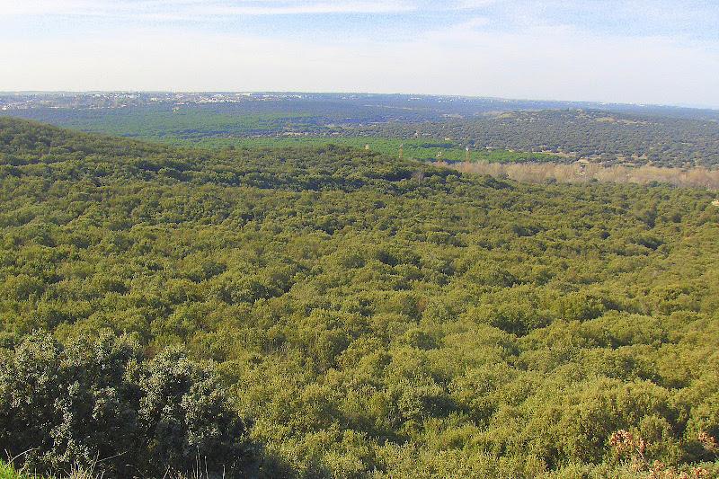 Monte del Pardo