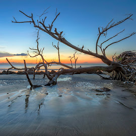 Blue hour by PENDI KAMRI - Landscapes Beaches ( sky, beautiful, blue, dead tree, sunset, beach, tree, water, sea,  )
