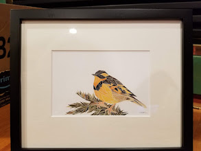 Photo: Original watercolor Geometric Varied Thrush By Made by Morning