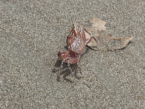Photo: Crab on the beach