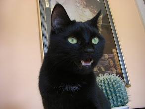Photo: unser Sammy - immer die Klappe offen..... :-)   (Katzenzimmer)