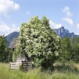 The meeting bush