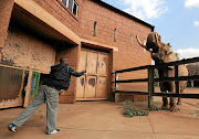 Charlie the elephant waits as  zoo worker Tshepo Tyolo throws him a loaf of bread  at the National Zoological Gardens in Pretoria.