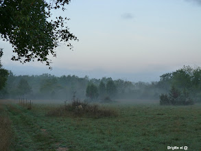 Photo: Brume du matin