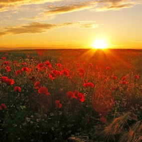 summer sunset by Victor Pavel - Landscapes Prairies, Meadows & Fields ( .... )