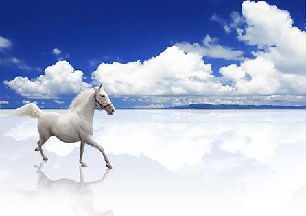 Fénykép: Ezen lehet, hogy meglepődsz? Vagy Te tudtad, hogy a bőség-szimbólumok közé sorolhatjuk a lovat is?Tibetben ugyanis a gazdagság és a szerencse jelképének tartják.Jó, mondjuk a szerencsepatkó nálunk is köthető a lovakhoz, igaz? :-)További hasznosságok, JÓságok pénz, bőség témákban változatlanul itt: https://www.facebook.com/gazdagnok(a kép forrása: sxc)