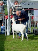 Photo: Rubriek 1: witte boklammeren geboren tussen 16-2 en 18-4 2012.  1a. Niels van de Kastanjehoeve.